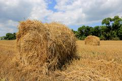crop field with hay rolls - stock photo