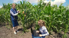 Stock Video Footage of Two agronomist examining corn field.