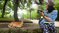 Thai woman shooting photo Deers at Todai-ji Temple in Nara, Japan Stock Footage