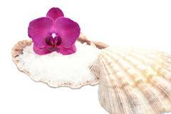 Orchid on a seashell with sea salt Stock Photos