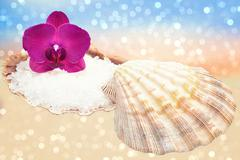 Orchid and seashell with sea salt on a sparkling sandy beach Stock Photos