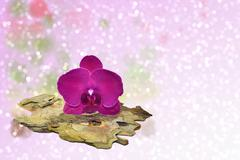 Pink orchid and a tree bark on a sparkling bokeh background Stock Photos