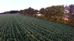 Low flying over corn field drifting from right to left next to a trailer park 4k Stock Footage