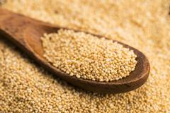 White poppy seeds - stock photo