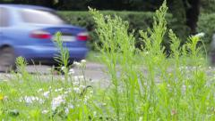 View the grass car ride on highway Stock Footage