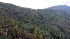 Australian Rainforest near Cairns, Australia Stock Footage