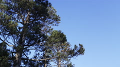Tilting shot of mountain range and trees near Lake Tahoe, California. Stock Footage