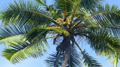 branches of coconut palm against blue sky 4k - stock footage