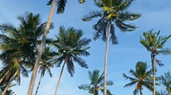 Coconut palms under blue sky 4k Stock Footage
