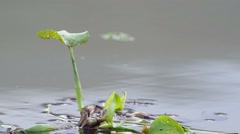 Water hyacinth floating in the reservoir Stock Footage