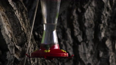 Hummingbird drinking from a bird feeder multiple times. Stock Footage