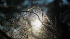 Evening sun shines trough the mysterious tunnel of spider cobweb. Close up Stock Footage