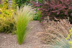Drought resistant plants and grasses Stock Photos