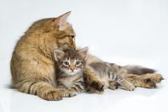 Stock Photo of Cat And Kitten