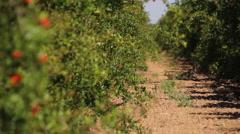 Fruit Tree Row Stock Footage