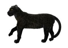 Black Panther Stock Illustration