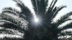 Palm Tree Sunrise - 29,97FPS NTSC - stock footage
