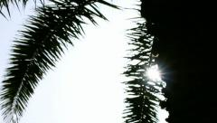Palm Tree Silhouette  by Sunshine Holiday Background - 29,97FPS NTSC - stock footage