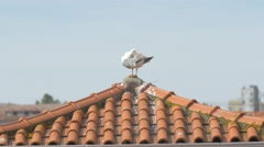 Seagull on a roof in Porto Stock Footage