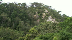 Australian Rainforest near Cairns, Australia Stock Footage