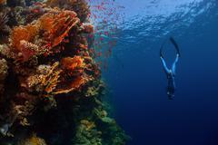 Freediver in the sea Stock Photos