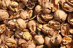 Cracked nuts, fruits of wallnut, Juglans regia L. Stock Photos