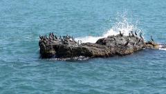 Cormorants on the island in the sea Stock Footage