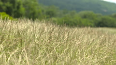 Grass blowing in wind slow motion Stock Footage