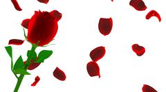 red rose with petals isolated on white - stock illustration
