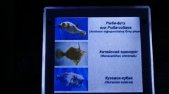 Tablet, Nameplate in Oceanarium, Fishes' Titles Stock Footage