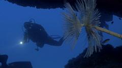 UltraHD underwater shot of scuba diver exploring mediterranean reef Stock Footage