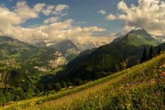 Jungfrau peak and alpine meadow wild flowers 6K native Stock Footage