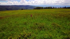 Young Girl Running Through A Lush Green Field Full of Flowers Stock Footage