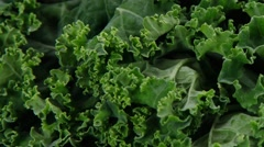 Fresh raw green kale Stock Footage