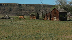SOLITARY HORSE AND SMALL RURAL SHACK IN OPEN FIELD Stock Footage