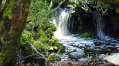 Tasmanian rainforest stream cascading over a small waterfall - stock footage