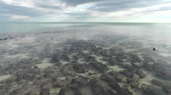 Stromatolites Shark Bay Australia panorama Stock Footage