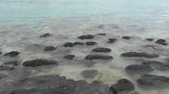 Stromatolites Hamelin Pool Australia panorama Stock Footage
