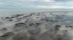 Panorama Stromatolites Shark Bay Australia Stock Footage