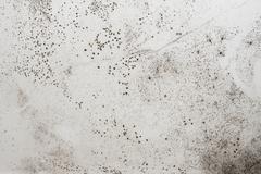 Damp wall - stock photo