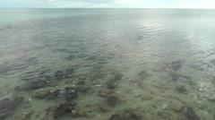 Panorama Shark Bay Stromatolites Australia Stock Footage