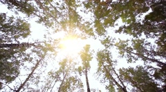 Upward view of Fall Trees. Forest in autumn Stock Footage