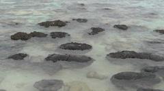 Stromatolites close up Shark Bay Stock Footage
