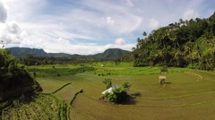 Flyover riceterrace and plantation Bali Stock Footage