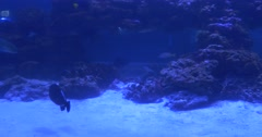 Different Fishes, Silhouettes, Selene Vomer, Chrysiptera, Acanthurus, Flossil Stock Footage