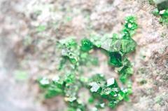 Uvarovite is a chromium-bearing garnet. Macro. - stock photo