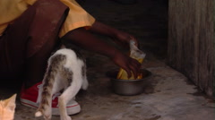 Cats being fed in Africa. Stock Footage