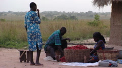 A family with a basket of chili peppers in Africa. Stock Footage