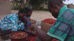 An African family sorting chili peppers. Stock Footage