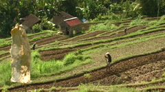 People working in a field in Bali. Stock Footage